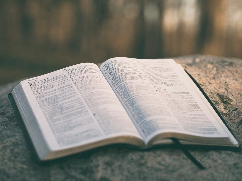 """MENSAGEM DE REFLEXÃO: """"NÃO TENHAM MEDO; VOCÊS VALEM MAIS DO QUE MUITOS PARDAIS"""" (MATHEUS 10.31)"""