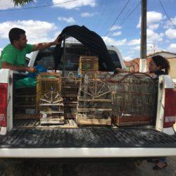 LAGARTO: ADEMA E PM APREENDEM MAIS DE 70 ANIMAIS SILVESTRES